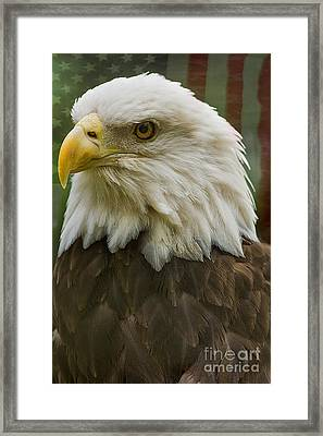 American Bald Eagle With American Flag Background Framed Print by Anne Rodkin