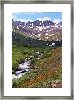 American Basin Wildflowers Framed Print