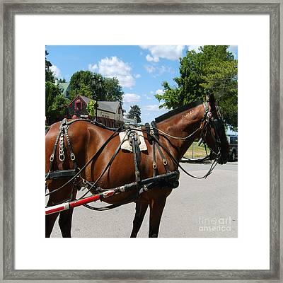 American Bay Quarter Horse Framed Print