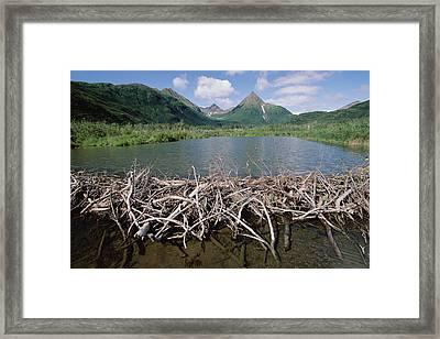 American Beaver Dam Silver Horn Creek Framed Print