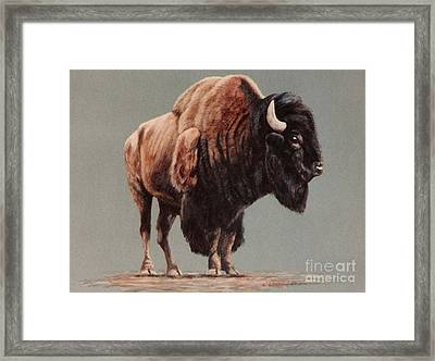 Framed Print featuring the painting American Bison by DiDi Higginbotham