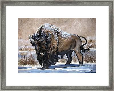 American Bison Winter Framed Print by Anne Shoemaker-Magdaleno