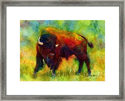 American Buffalo Framed Print by Hailey E Herrera