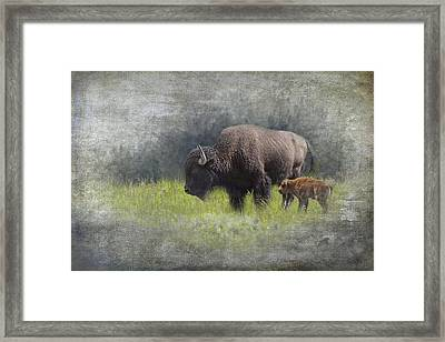 American Buffalo Mother And Calf Framed Print by Randall Nyhof