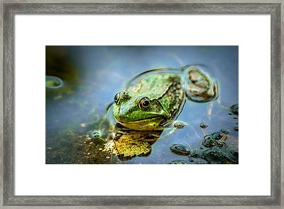 American Bull Frog Framed Print by Optical Playground By MP Ray