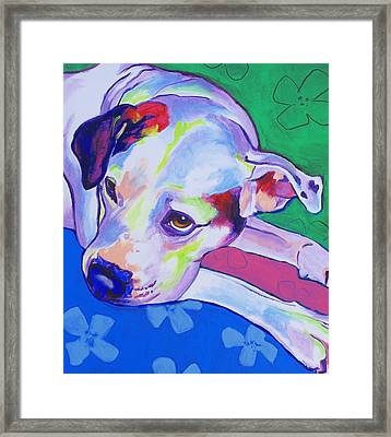 American Bulldog - Raja Framed Print by Alicia VanNoy Call