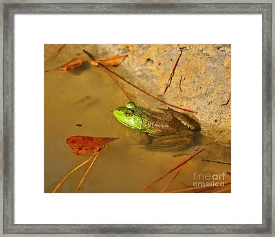 American Bullfrog Framed Print by Al Powell Photography USA