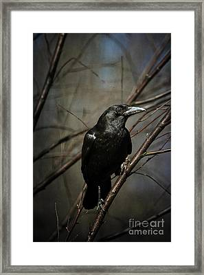 American Crow Framed Print