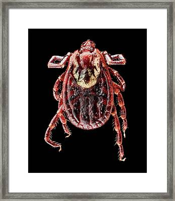 American Dog Tick Framed Print by Us Geological Survey