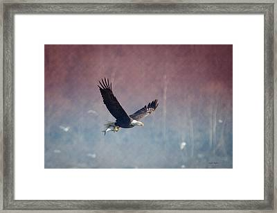 American Eagle Framed Print