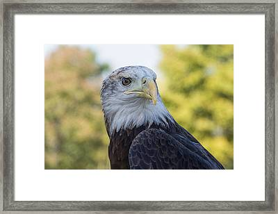 Framed Print featuring the photograph American Eagle by Jeanne May
