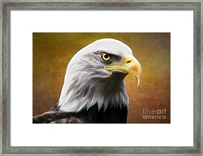 American Eagle Framed Print by Shannon Rogers