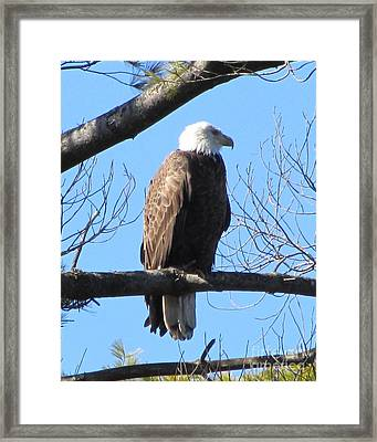 American Eagle Framed Print by Susan Carella