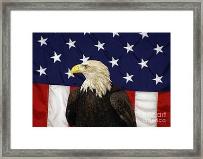 American Eagle And Flag Framed Print