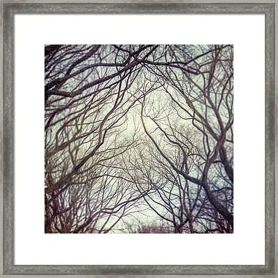 American Elm Trees Of Central Park In New York City In Winter Framed Print by Lisa Russo