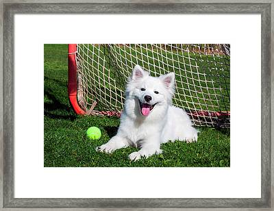 American Eskimo, Los Angeles Framed Print