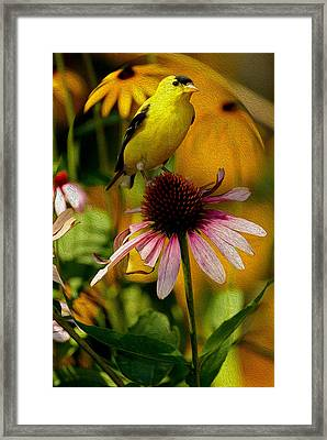 American Goldfinch - Digital Art Framed Print by Gerald Marella