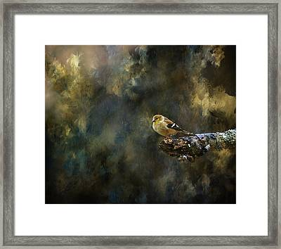 American Goldfinch 4 Framed Print by Deena Stoddard