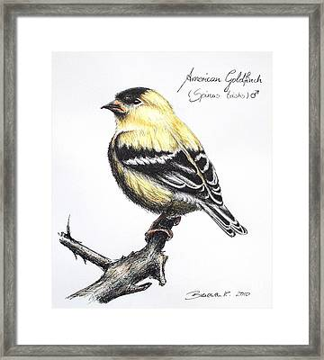 American Goldfinch Framed Print by Katharina Filus