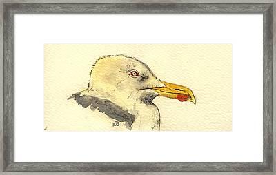 American Herring Gull Framed Print