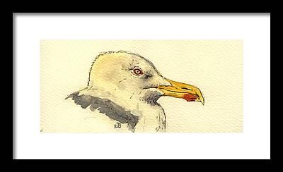Herring Gull Framed Prints