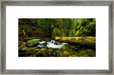 American Jungle Framed Print by Chad Dutson