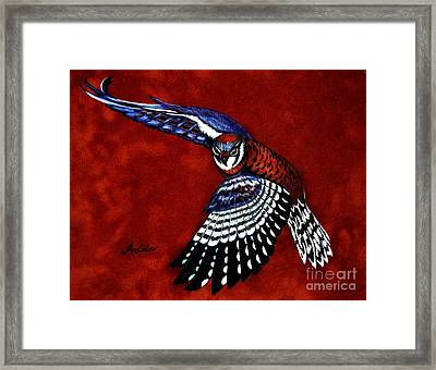 American Kestrel Framed Print by Adele Moscaritolo