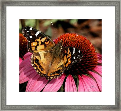Framed Print featuring the photograph American Lady  by James C Thomas