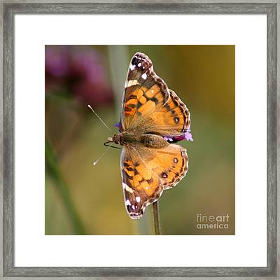 American Lady Butterfly Framed Print by Karen Adams