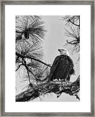 American Framed Print by Nicholas Evans