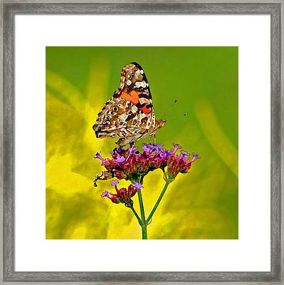 American Painted Lady Butterfly Framed Print by Karen Adams