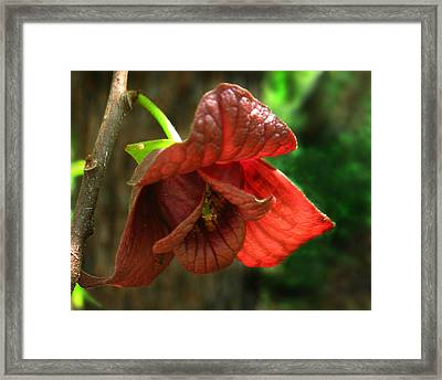 Framed Print featuring the photograph American Pawpaw by William Tanneberger