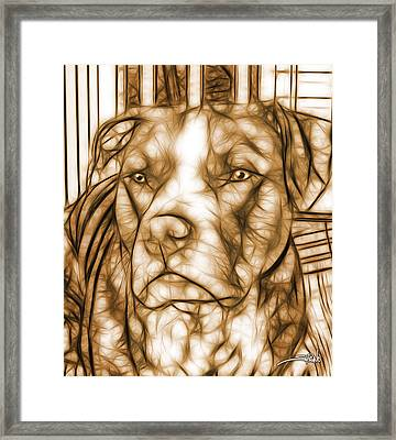 American Pit Bull - Sepia Sketch  Framed Print by Michael Spano