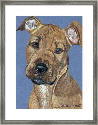 American Pit Bull Terrier Puppy Framed Print by Anita Putman
