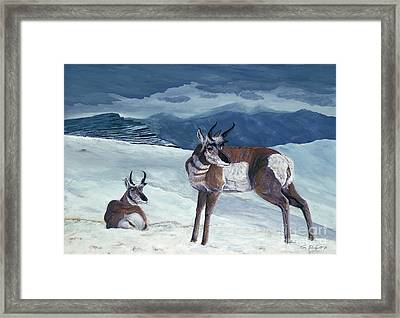 American Pronghorn Framed Print by Tom Blodgett Jr