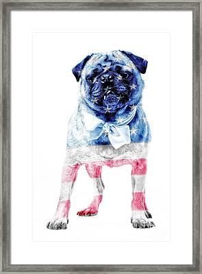American Pug Framed Print by Edward Fielding