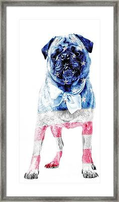 American Pug Phone Case Framed Print by Edward Fielding