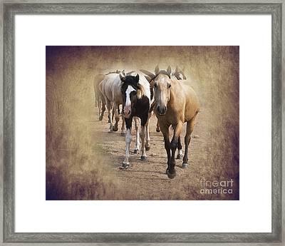 American Quarter Horse Herd Framed Print