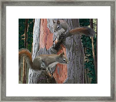 American Red Squirrels Framed Print