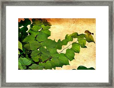 Framed Print featuring the photograph American Redbud by Denise Tomasura