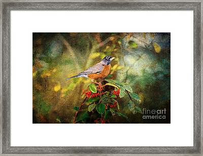 American Robin - Harbinger Of Spring Framed Print by Lianne Schneider