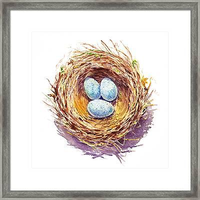 American Robin Nest Framed Print by Irina Sztukowski