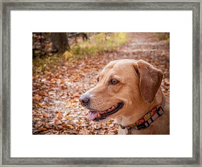 American Shelter Dog Framed Print