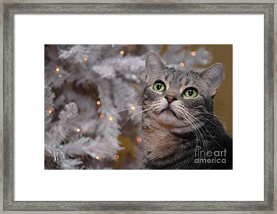 American Shorthair Cat With Holiday Tree Framed Print