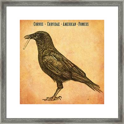 American Smoking Crow Framed Print by Penny Collins