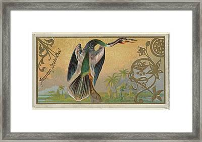 American Snake Bird, From The Game Framed Print by Issued by Allen & Ginter