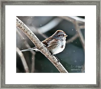 American Tree Sparrow Profile Framed Print