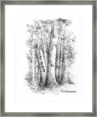 American White Birch Framed Print