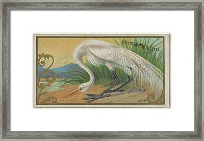 American White Egret, From The Game Framed Print by Issued by Allen & Ginter