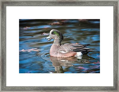Framed Print featuring the photograph American Wigeon by Tyson and Kathy Smith